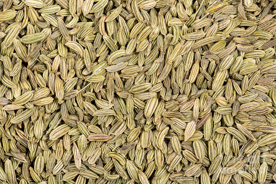 Fennel Photograph - Fennel Seeds by Jane Rix