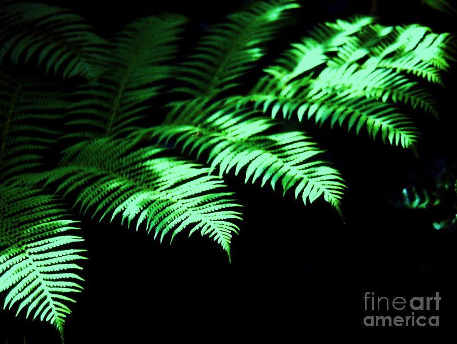 Ferns # 1 Photograph by Marcus Dagan