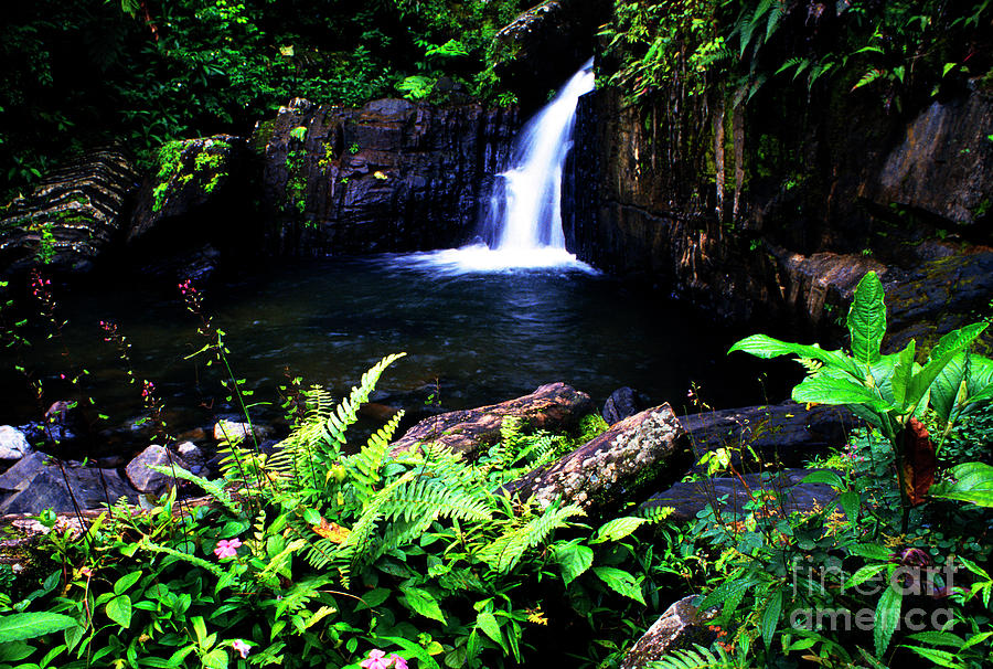 Puerto Rico Photograph - Ferns Flowers And Waterfall by Thomas R Fletcher
