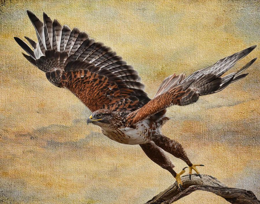 Wildlife Photograph - Ferruginous Hawk by Russell Dudzienski