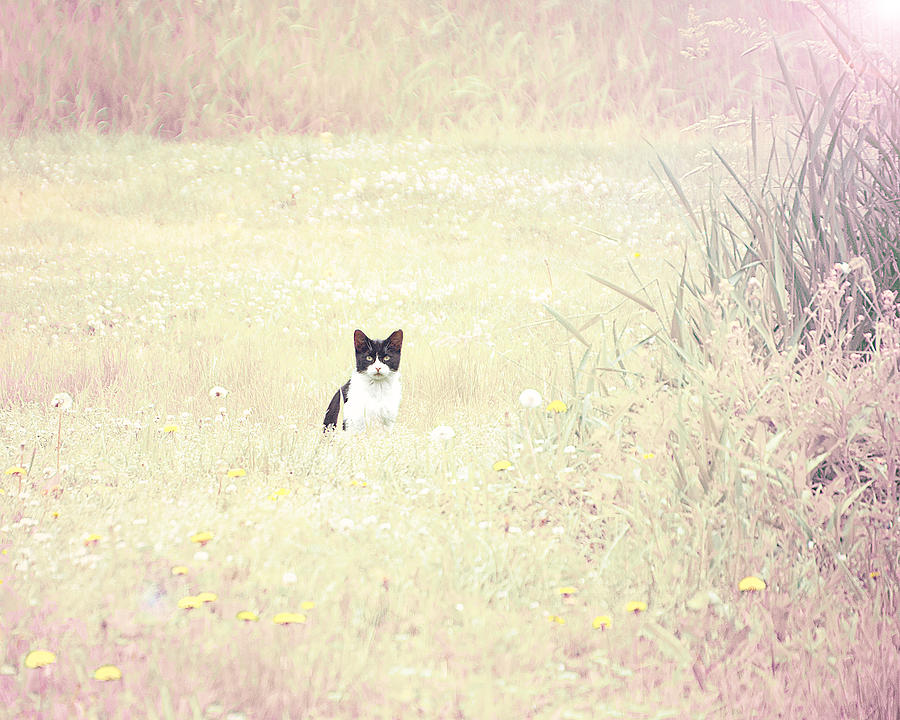 Cat Photograph - Field Cat by Kellie Prowse