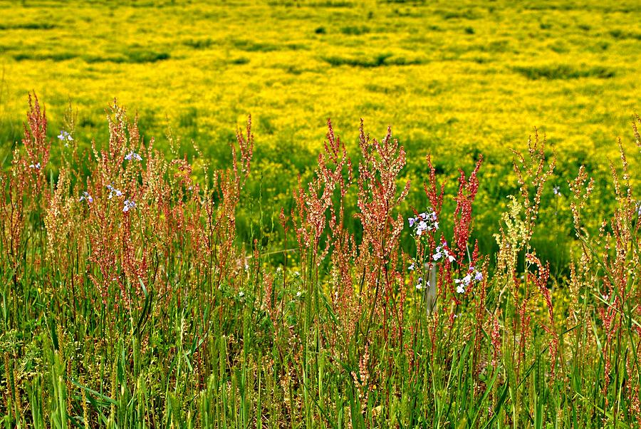 Field Photograph - Field In Spring by Beverly Hammond