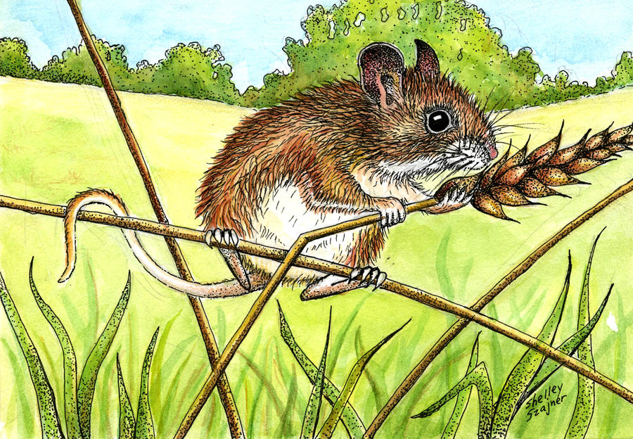 Animal Painting - Field Mouse by Shelley Shayner
