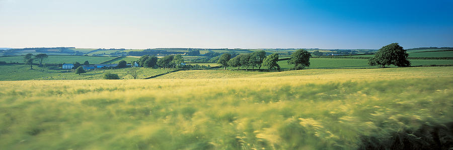 Color Image Photograph - Field Near Barnstaple, North Devon by Panoramic Images