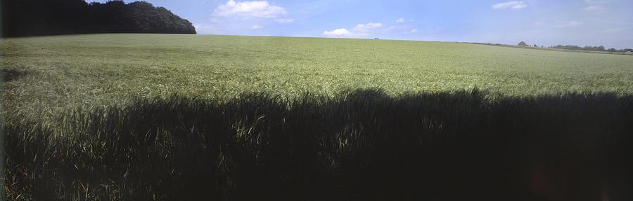 Field near High Wycombe UK Photograph by Daniel Blatt