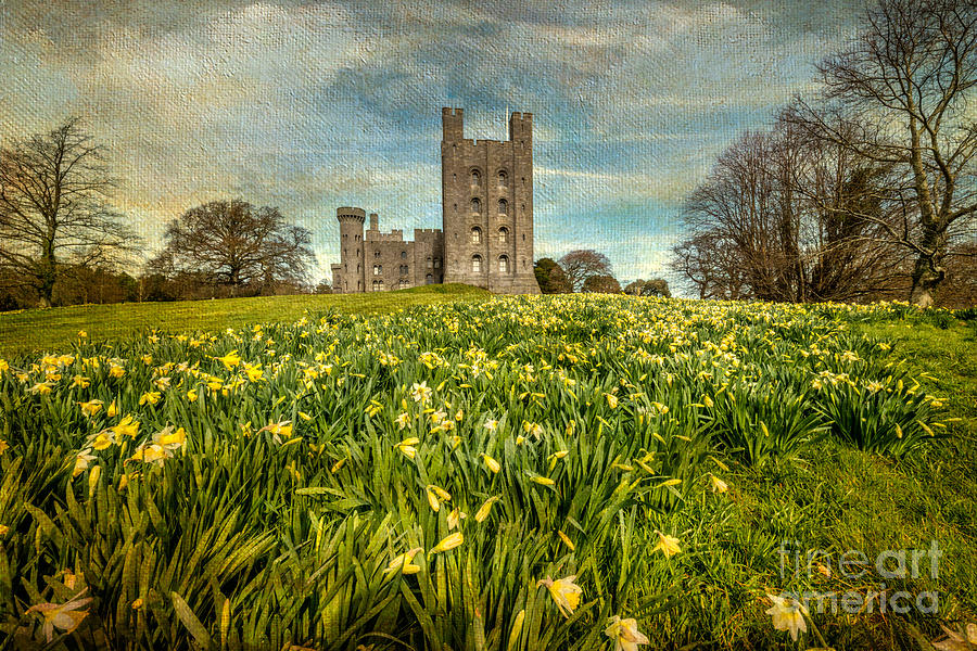 Daffodils Photograph - Field Of Daffodils by Adrian Evans