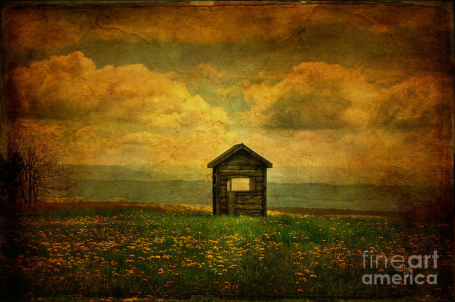 Shed Photograph - Field Of Dandelions by Lois Bryan