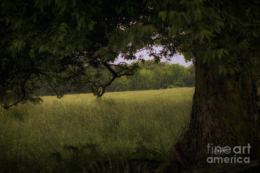 Field Of Dreams Photograph - Field Of Dreams II by Cris Hayes