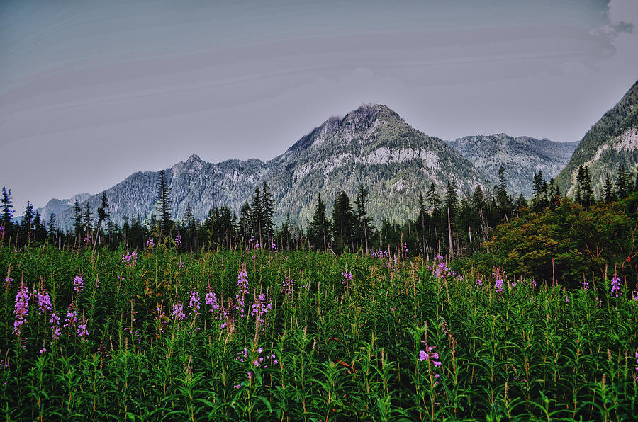 Big Four Photograph - Field Of Dreams by Kelly Reber