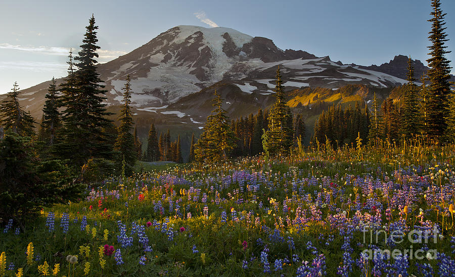 Rainier Photograph - Field Of Dreams by Mike Reid