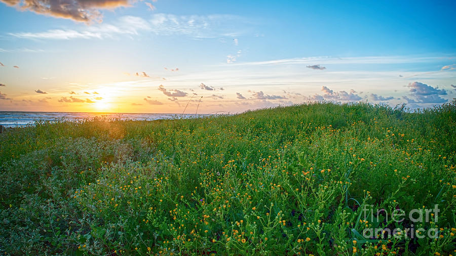 Sunrise Photograph - Field Of Flowers At Sunrise  by Tammy Smith