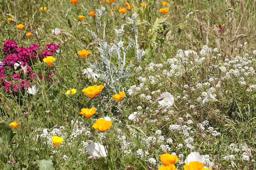 Flowers Photograph - Field Of Flowers by Artist and Photographer Laura Wrede