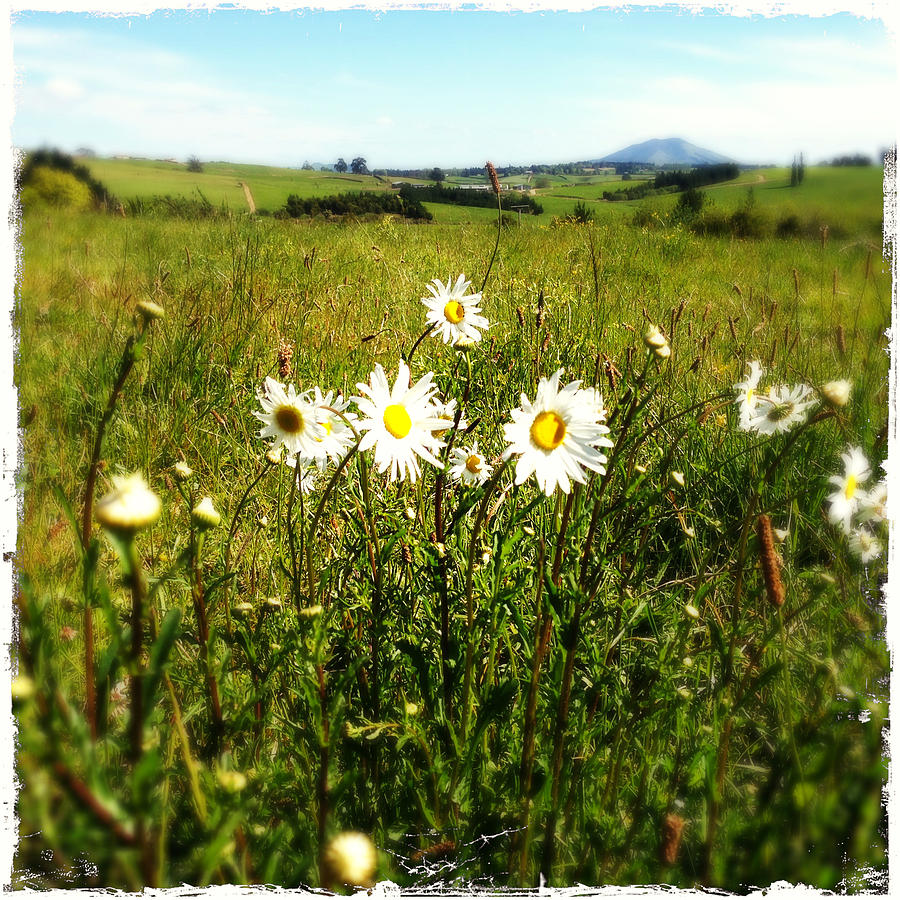 Beautiful Photograph - Field Of Flowers by Les Cunliffe