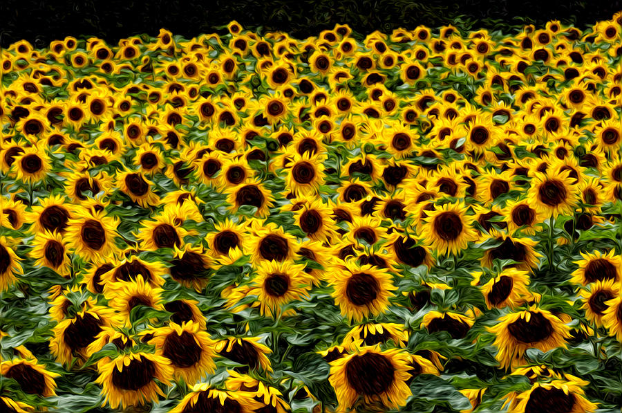 Flowers Photograph - Field Of Flowers by Mitchell Brown