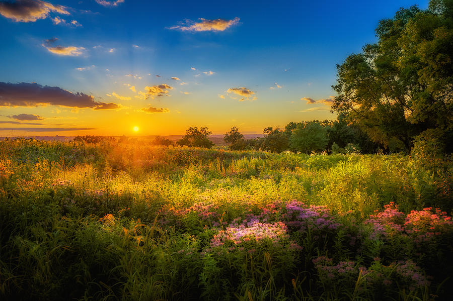 Flowers Photograph - Field Of Flowers Sunset by Mark Goodman