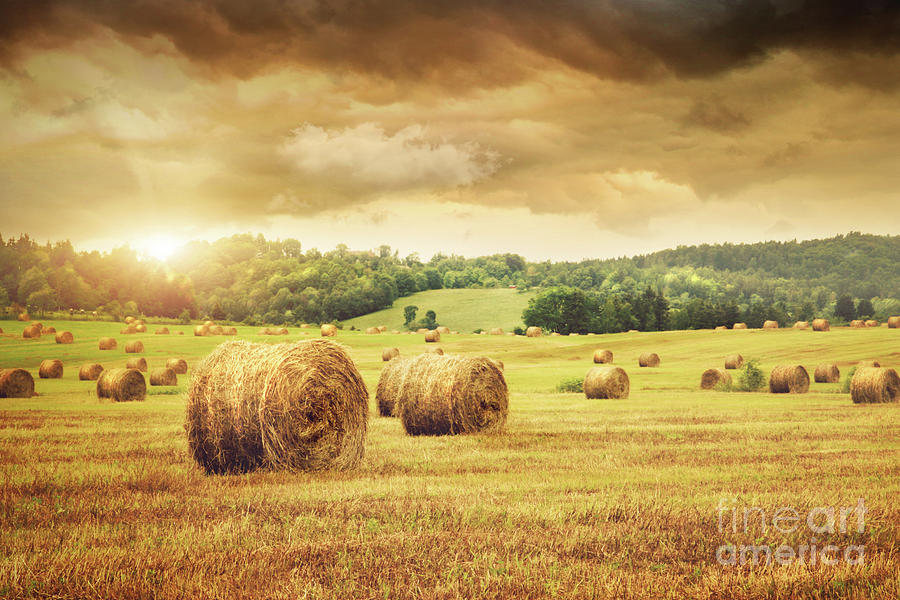 Agricultural Photograph - Field Of Freshly Bales Of Hay With Beautiful Sunset by Sandra Cunningham