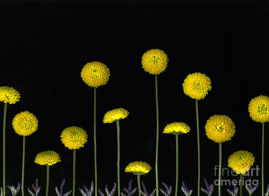 Scanography Photograph - Field Of Gold by Christian Slanec