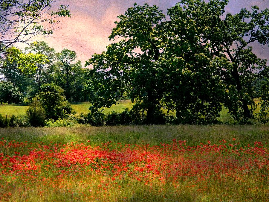 Landscape Photograph - Field Of Poppies by Anne McDonald