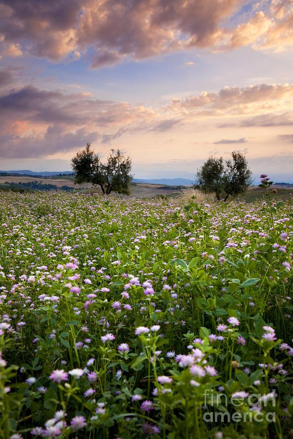 Field Photograph - Field Of Wildflowers by Brian Jannsen