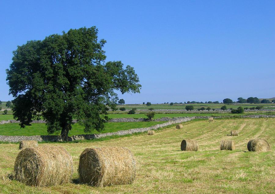 Fields at Monsal Dale by Stephen Haunts