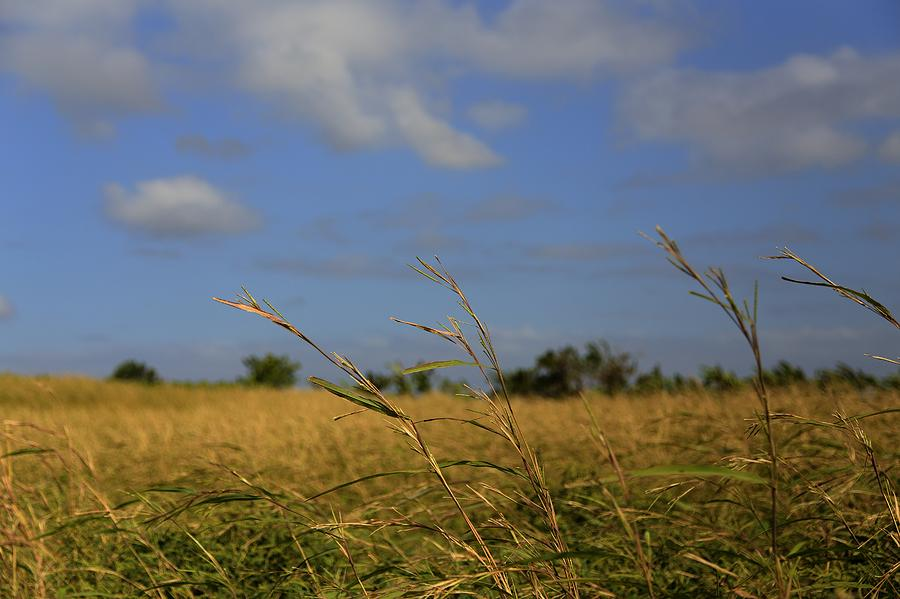 Fields Photograph - Fields by Mario Legaspi