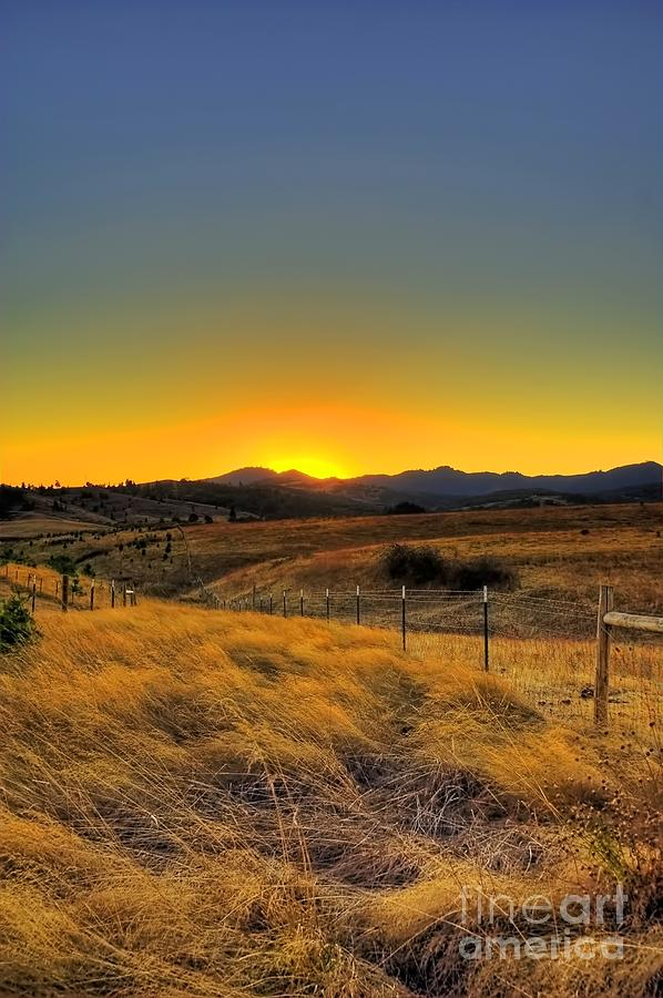 fields of gold photograph by tyra obryant