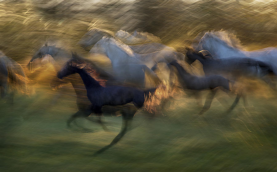 Horse Photograph - Fiery Gallop by Milan Malovrh