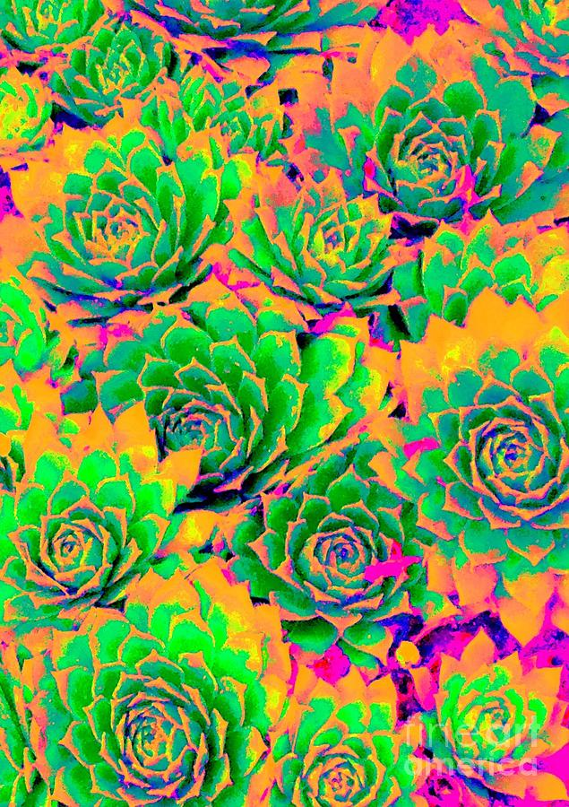 Plant Photograph - Fiesta Chicks by Ann Johndro-Collins