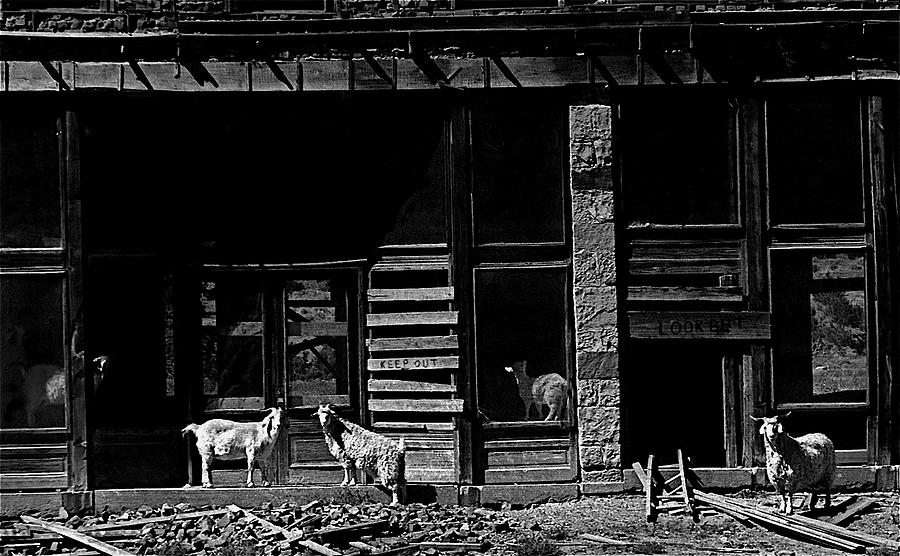 Film Homage King Vidor Billy The Kid 1930 Wild Goats Ghost Town Billy The Kid Haunt White Oaks Nm 19 Photograph by David Lee Guss