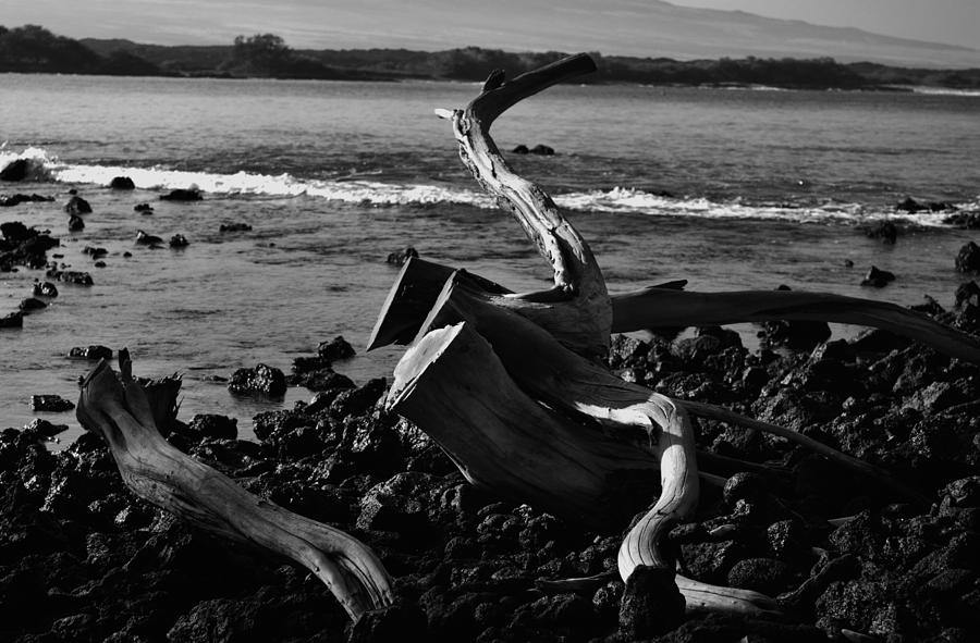 Driftwood Photograph - Final Resting Place by Tara Miller