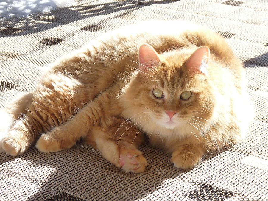 Cat Photograph - Finally Some Sun by Janis  Cornish