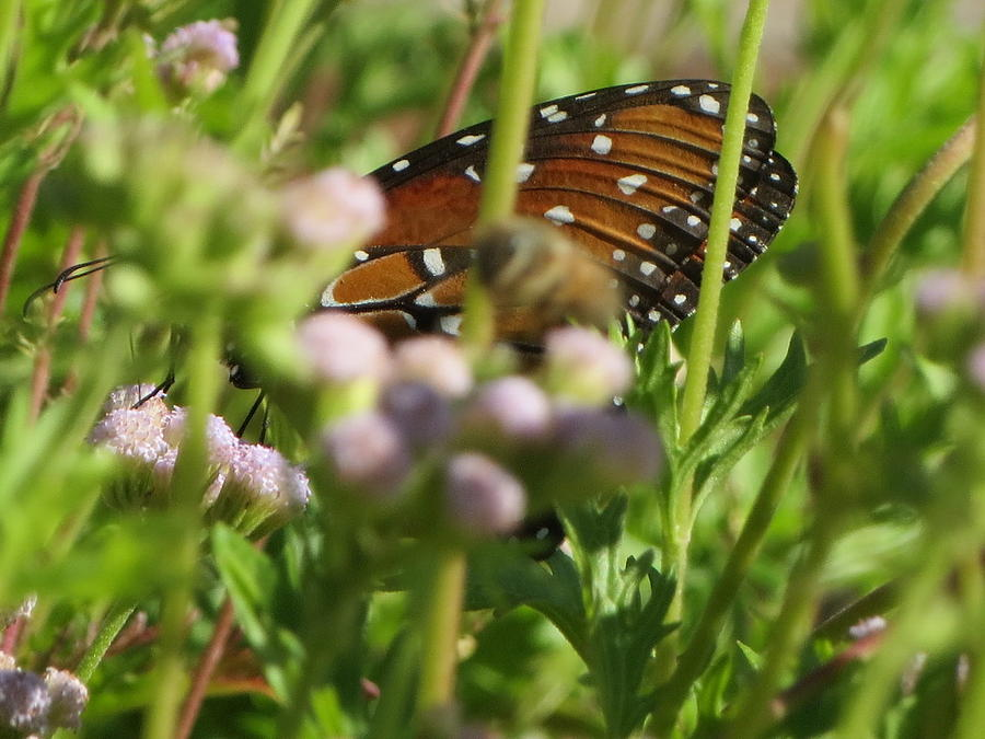 Find The Butterfly by Cindy Clements