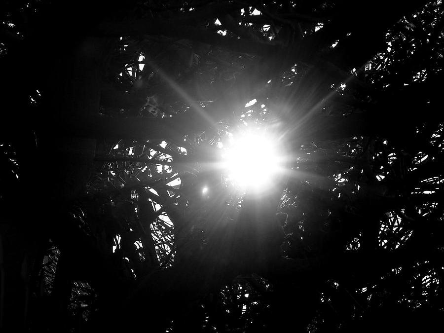 Sunlight Photograph - Finding Hope by Keisha Marshall