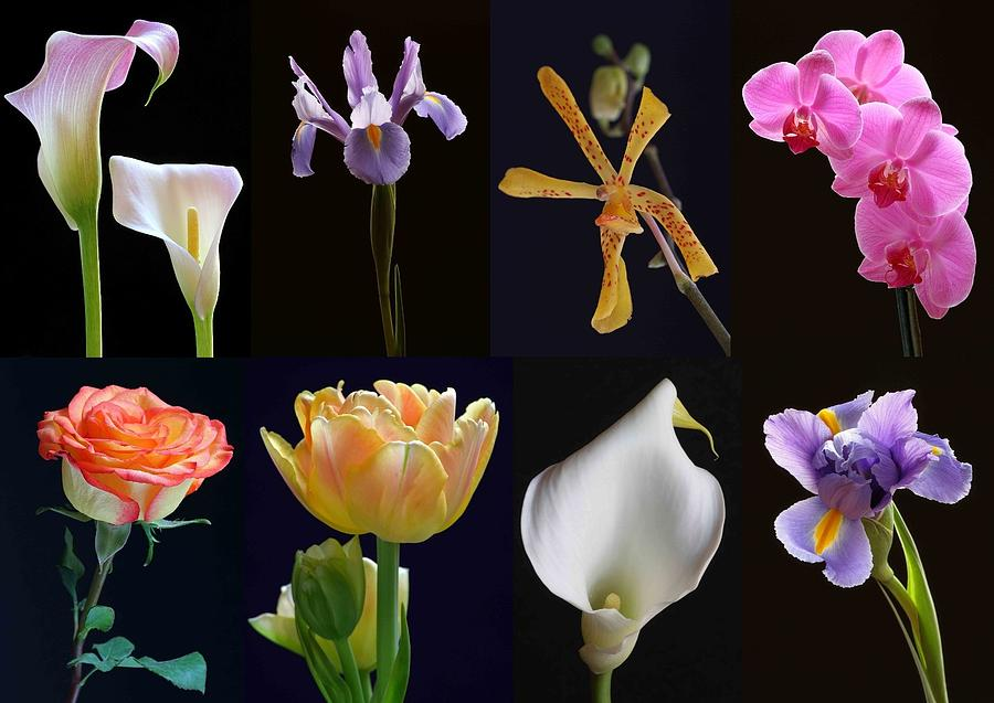Orchid Photograph - Fine Art Flower Photography by Juergen Roth