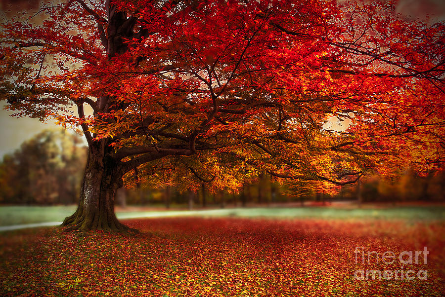 Autumn Photograph - Finest Fall by Hannes Cmarits