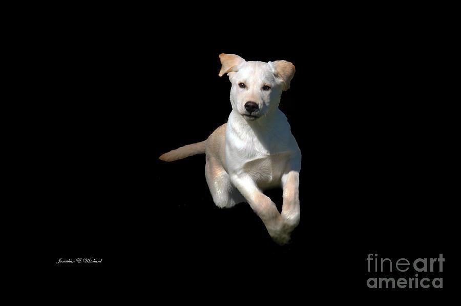 Animals Photograph - Finn  by Jonathan E Whichard