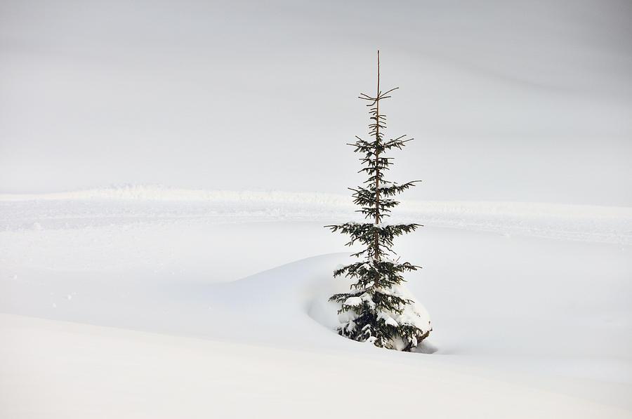 Fir Photograph - Fir Tree And Lots Of Snow In Winter Kleinwalsertal Austria by Matthias Hauser