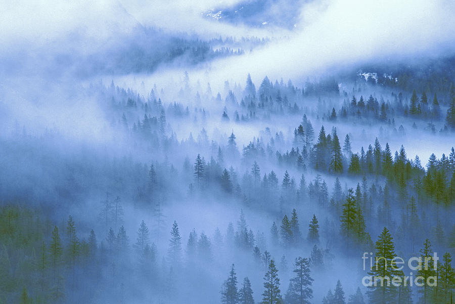 North America Photograph - Fir Trees Shrouded In Fog In Yosemite Valley by Dave Welling