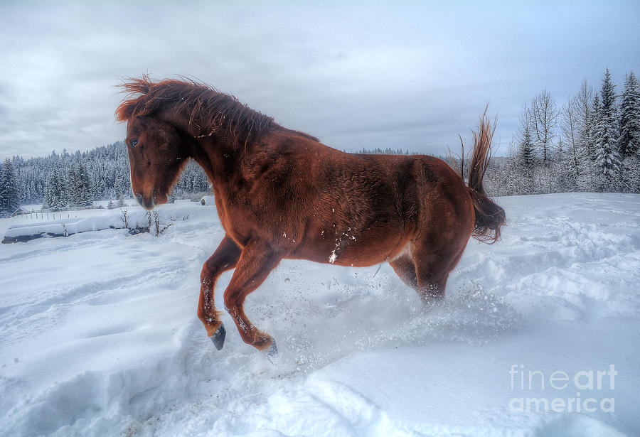 Horse Photograph - Fire And Ice by Skye Ryan-Evans