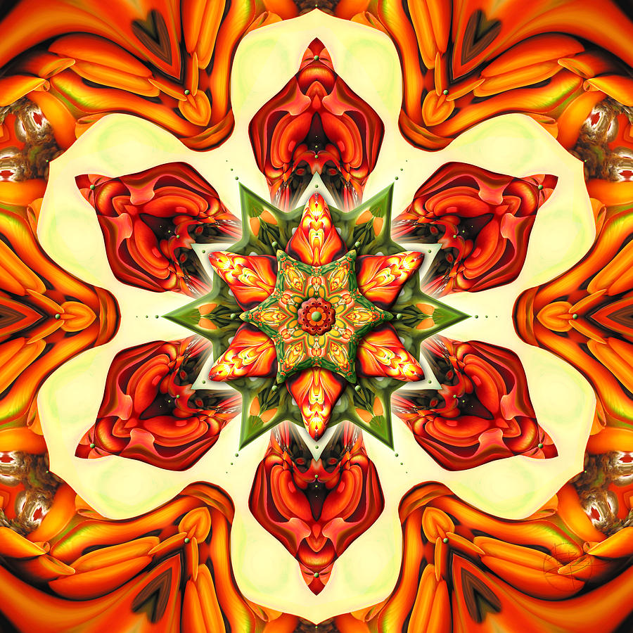 Mandala Photograph - Erythrina On Fire by Karen Hochman Brown