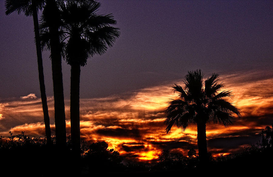 Palm Trees Photograph - Fire Haven by Marquis Crumpton