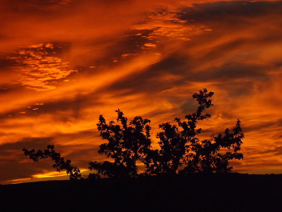 Fire In The Skies Photograph by Rebecca Cearley
