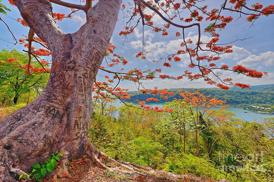 Vivid Photograph - Fire Tree by George Paris