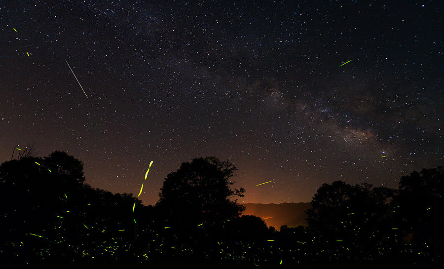 Fireflies And Night Sky Photograph by Kevin Adams