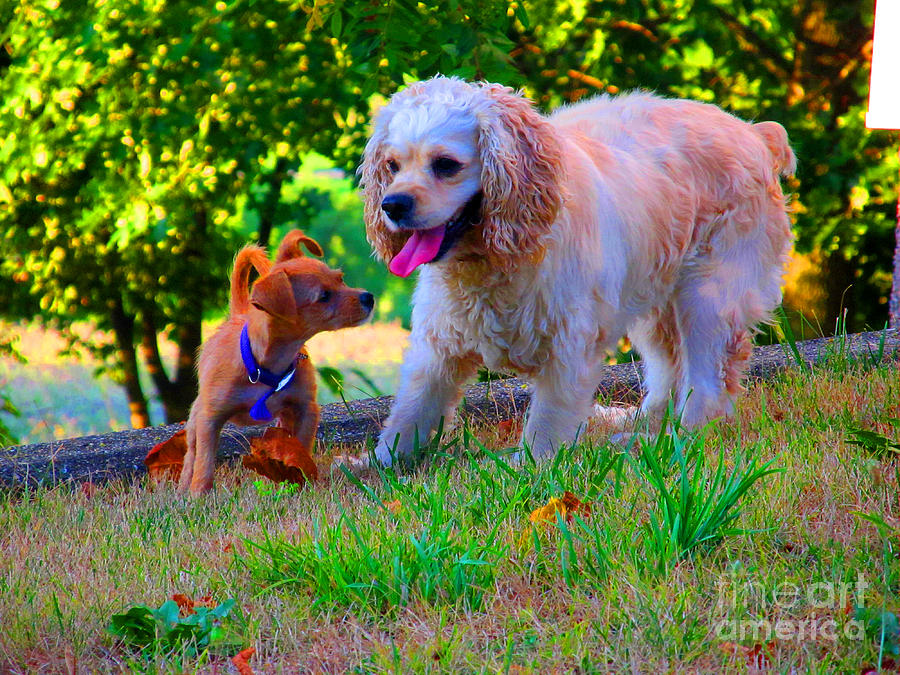 Dogs Photograph - First Anniversary Image Angel And Chika by Tina M Wenger