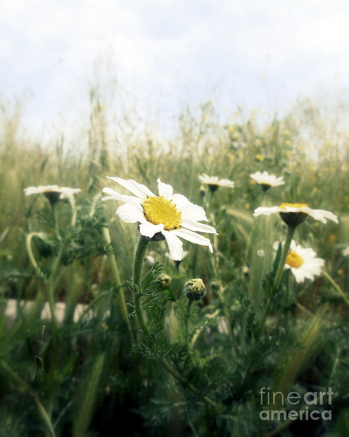 Nature Photograph - first day of May by Ioanna Papanikolaou