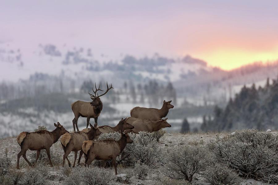 Animals Photograph - First Light by Nick Kalathas