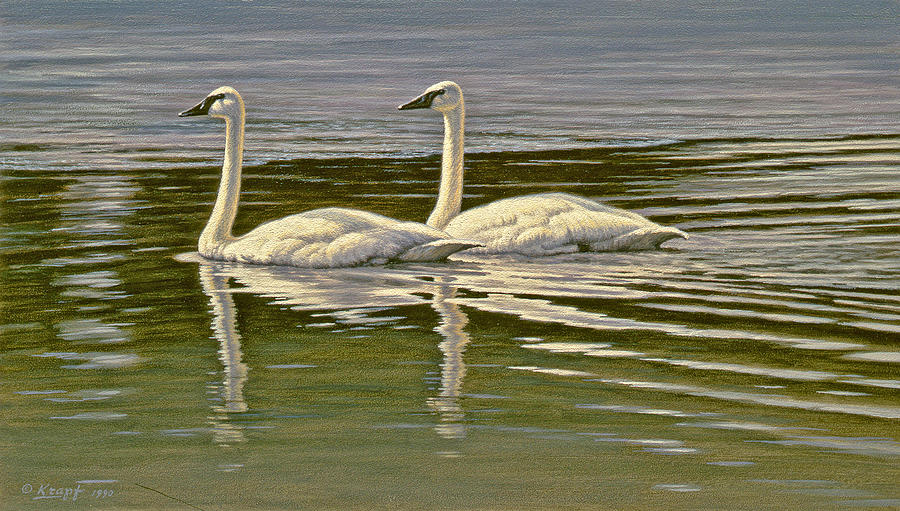 Wildlife Painting - First Open Water - Trumpeters by Paul Krapf