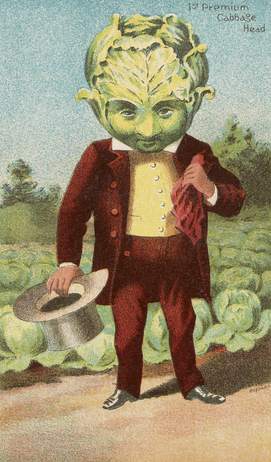 Vintage Drawing - First Premium Cabbage Head by Aged Pixel