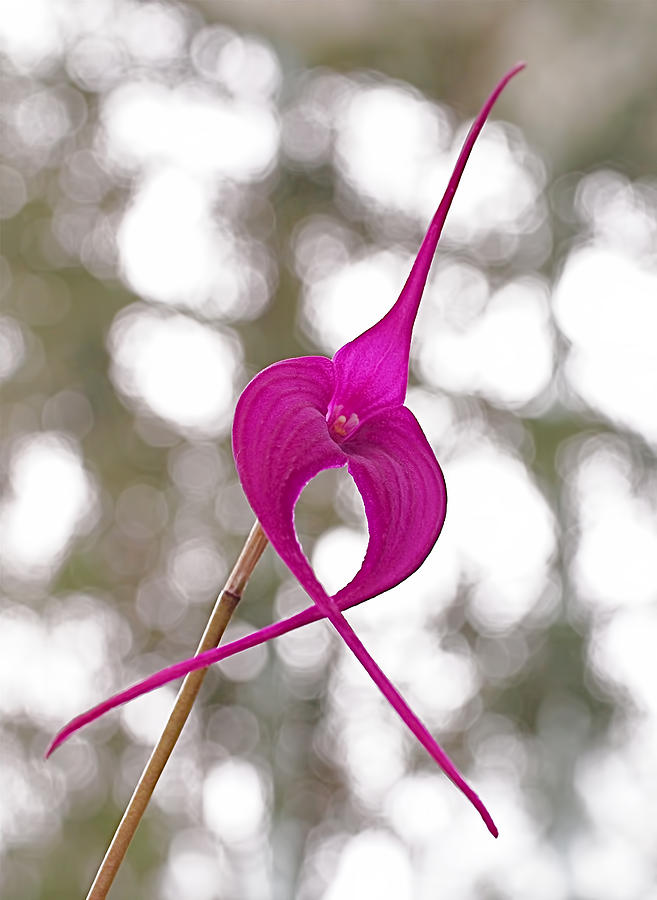 Orchid Photograph - First Prize by Rona Black